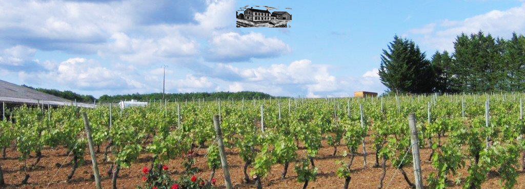 Vigneron indépendant des Charentes